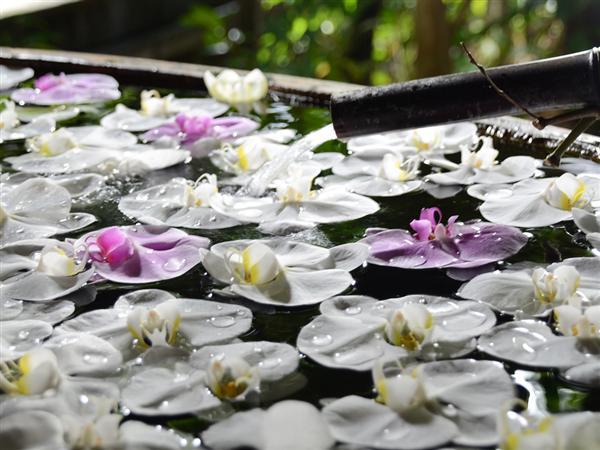 毎月第4木・金曜日は胡蝶蘭風呂が登場