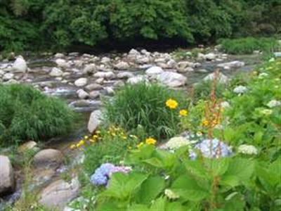 近くの嘉瀬川遊歩道での一枚  四季折々の季節の花や山野草が楽しめます