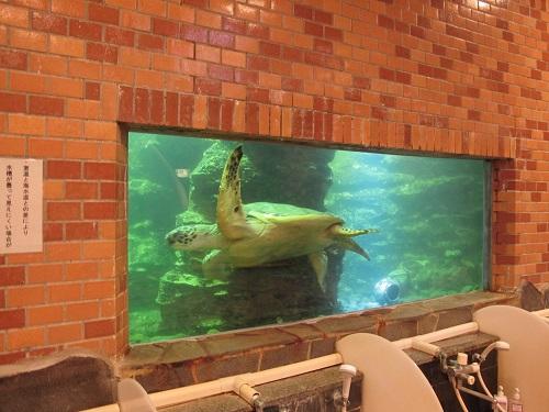 見て入って楽しめる国内でも珍しい水族館大浴場♪
