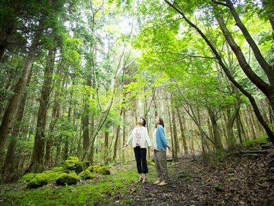 木漏れ日の塚原高原の森