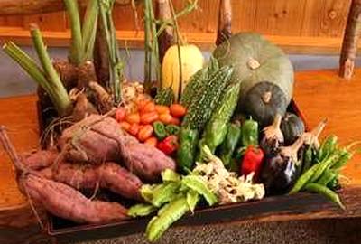 自家菜園で育てた有機野菜