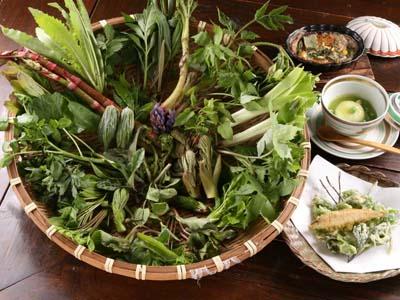 摘み草料理