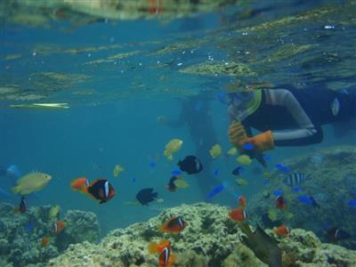 島の自然を体感する魅力的なアクティビティの数々