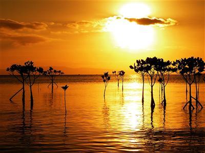 石垣島ならではの大自然を堪能