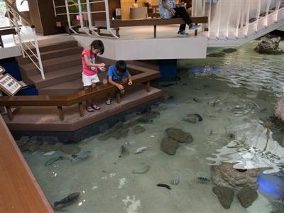 到着と同時に子どもが笑顔に!多種多様な生き物が住む大型水槽