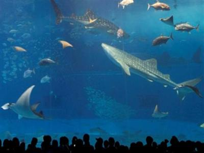 沖縄観光で絶対外せない、ちゅら海水族館まで車で30分の好立地。