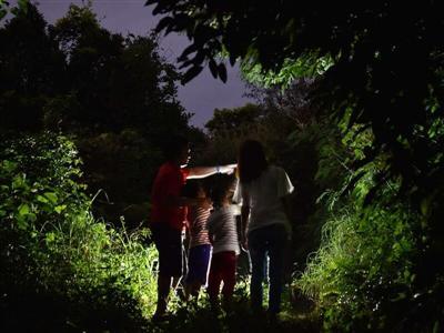 「探検!ナイトツアー」で宮古島の自然を堪能