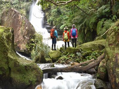 西表島観光で、ジャングルのトレッキングは外せない