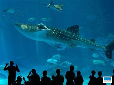 大人気の美ら海水族館チケット付きプランもあります。