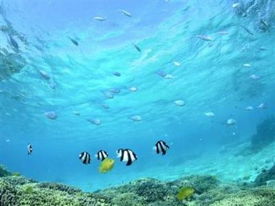 世界中のタイバーが憧れるミヤコブルーの海を満喫できる
