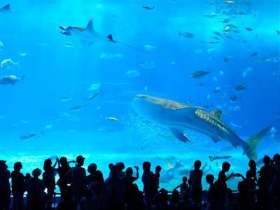 美ら海水族館へ好アクセス!立地をいかして遊び尽くして