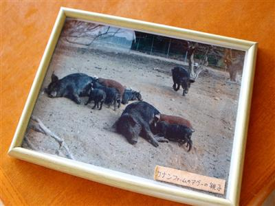動物たちに触れる「ファームツアー」で農場体験