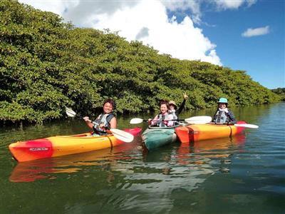 マングローブをカヌーで体験しよう!