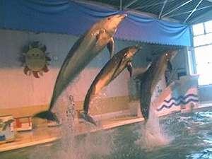 周辺スポット おたる水族館
