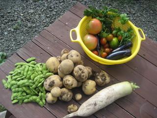 我が家の畑の野菜たち