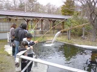 施設の釣堀では、気軽にヤマベ釣り体験を楽しめる